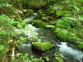 ヘナソ川 2.JPG