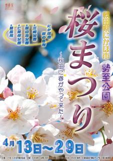 桜まつりs.jpg